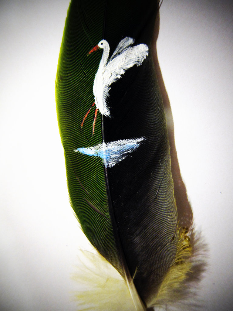 Bird on a Feather